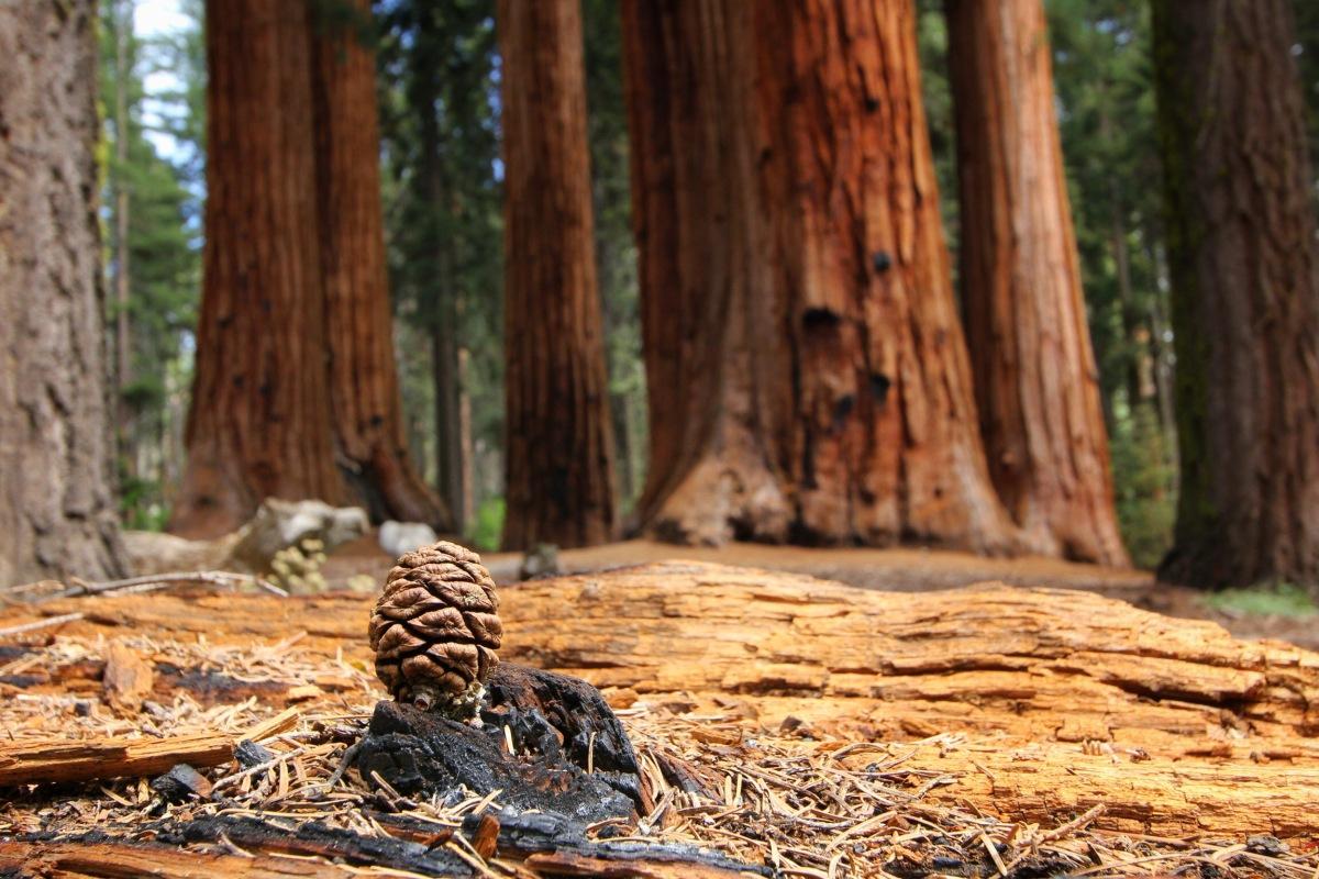 Junior Park Ranger im Sequoia & Kings CanyonNationalpark