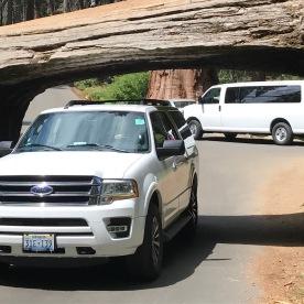 Tunnel Log Durchfahrt
